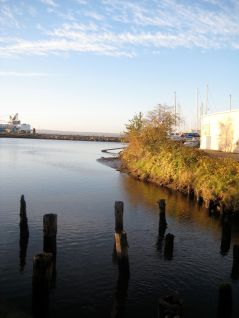 More Pilings in Bellingham Bay near Fairhaven